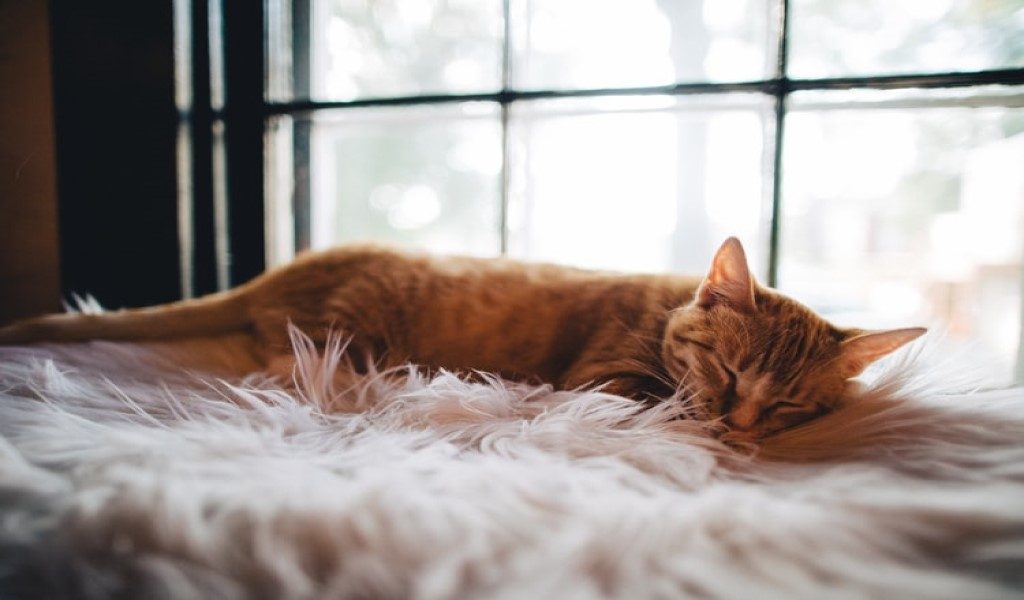 Consejos para tener un hogar sin estrés